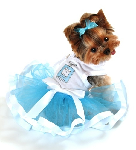 Chewnel No. 5 Paris Parfum Tutu Dress with Rhinestones in Blue <3 #dogs #pets http://www.poshpuppyboutique.com/Chewnel_No_5_Paris_Parfum_Tutu_Dress_with_Rhinest_p/ppb-drcno5-is.htm