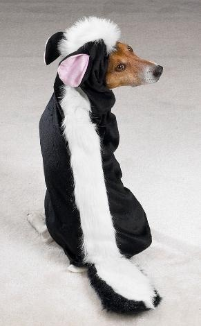 Dog Skunk Costume. This may have to be Percy's costume...
