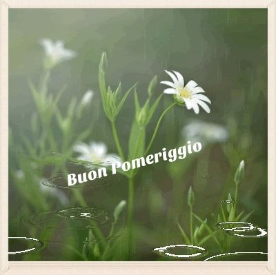 Buon Pomeriggio Photo: This Photo was uploaded by luanina3. Find other Buon Pomeriggio pictures and photos or upload your own with Photobucket free imag...
