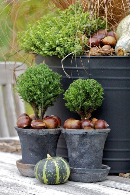 Visst är det toppen att ha basväxter i krukorna! Så att man bara behöver byta lite grann i säsongväxlingarna. Den här krukan har sedan i vår...