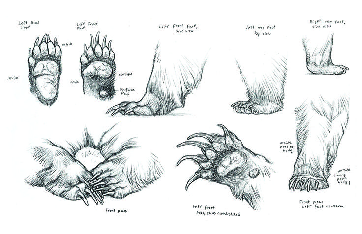 ✤ || CHARACTER DESIGN REFERENCES | キャラクターデザイン • Find more at https://www.facebook.com/CharacterDesignReferences if you're looking for: #lineart #art #character #design #illustration #expressions #best #animation #drawing #archive #library #reference #anatomy #traditional #sketch #development #artist #pose #settei #gestures #how #to #tutorial #comics #conceptart #modelsheet #cartoon #bear #bears || ✤