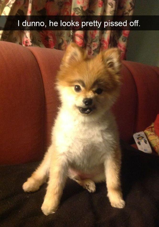 Funny Snapchats Dog Photo — 30 Pics