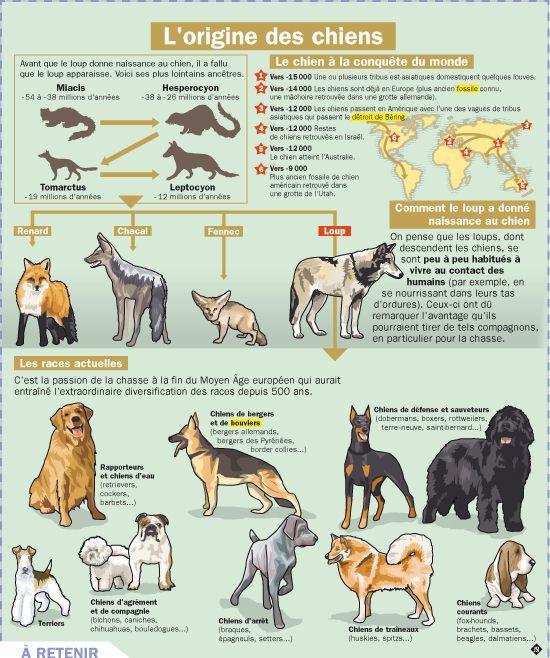 L'origine des chiens