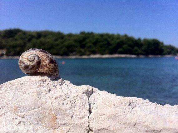 Sea shell on a rock