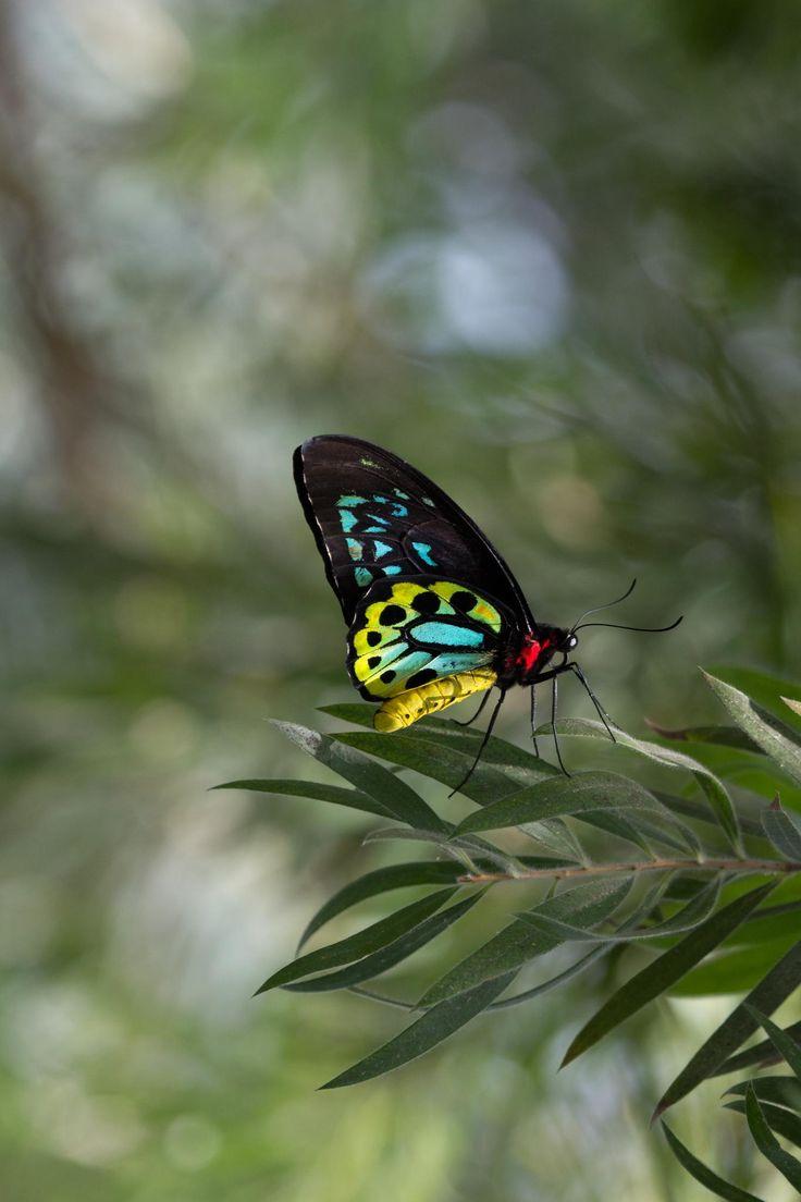 1486 best butterfly images on pinterest beautiful butterflies