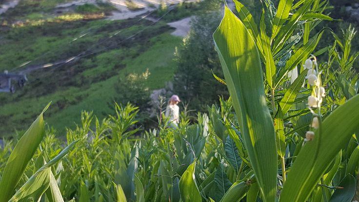 Leasure area of Jämi in Jämijärvi. Great place for you who love nature, fresh air and convenient trip to outdoorlife! Photo: Kirsi Virtanen. No filters. Jul 2016. #jämi # jämijärvi #jami #jamijarvi #holiday #hometown #visitfinland #outdoodlife # thisisfinland #naturelovers #scandinavia #stressfreezone #kiireenyläpuolella #mindfulness #outdoors #hiking #countryside #naturelovers #familyfirst #kotikunta #enjoyinglife #goodforyoursoul #suomi100 #kunnanjohtajaseikkailee #adventuresofmayor