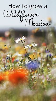 How to grow a wildflower meadow in your garden. You can grow a wildflower patch in your garden - it works best on poor soil. Sow the flower seeds and water in. Check for weeds and water occasionally until they establish. Let them self-seed around at the end for flowers every year!
