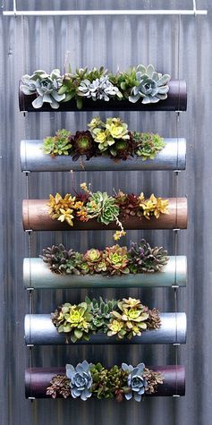 Pinterest - ideas plants in containers - Google Search