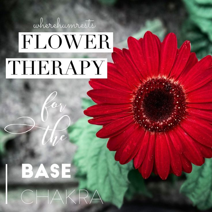 Flower Therapy for the Base Chakra