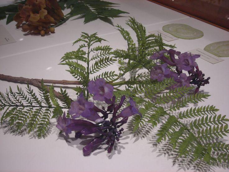 Leopold Blaschka Glass Flowers   marinni   Leopold и Rudolf Blaschka.Стеклянные цветы ...