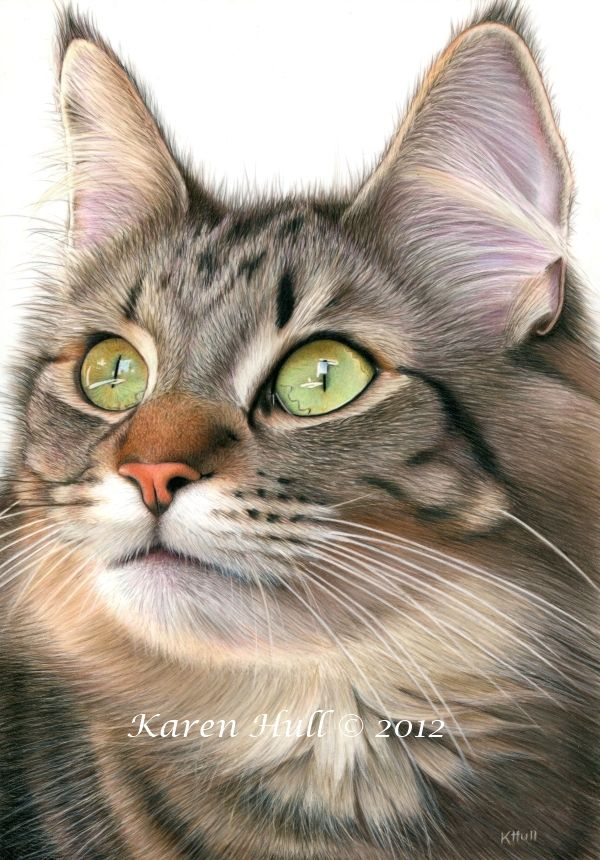 """""""Mesmerized"""" 8x10 inches Coloured pencil on drafting film  by award winning artist Karen Hull"""
