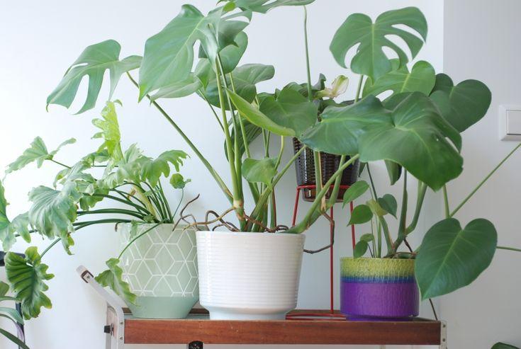 Binnenkijken bij Mila van plantenwinkel Wildernis - Roomed