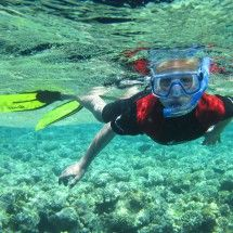 Pro Dive offers Snorkeling trips in the town of Port Elizabeth, Eastern Cape.