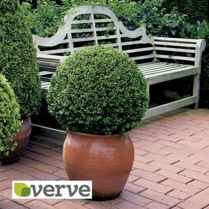 Use our Box Ball topiary as a statement in your garden borders! Available in store. #Topiary #BoxBall