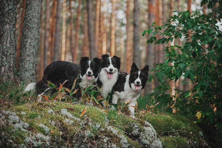 Фото, автор tyurina.photopets на Яндекс.Фотках