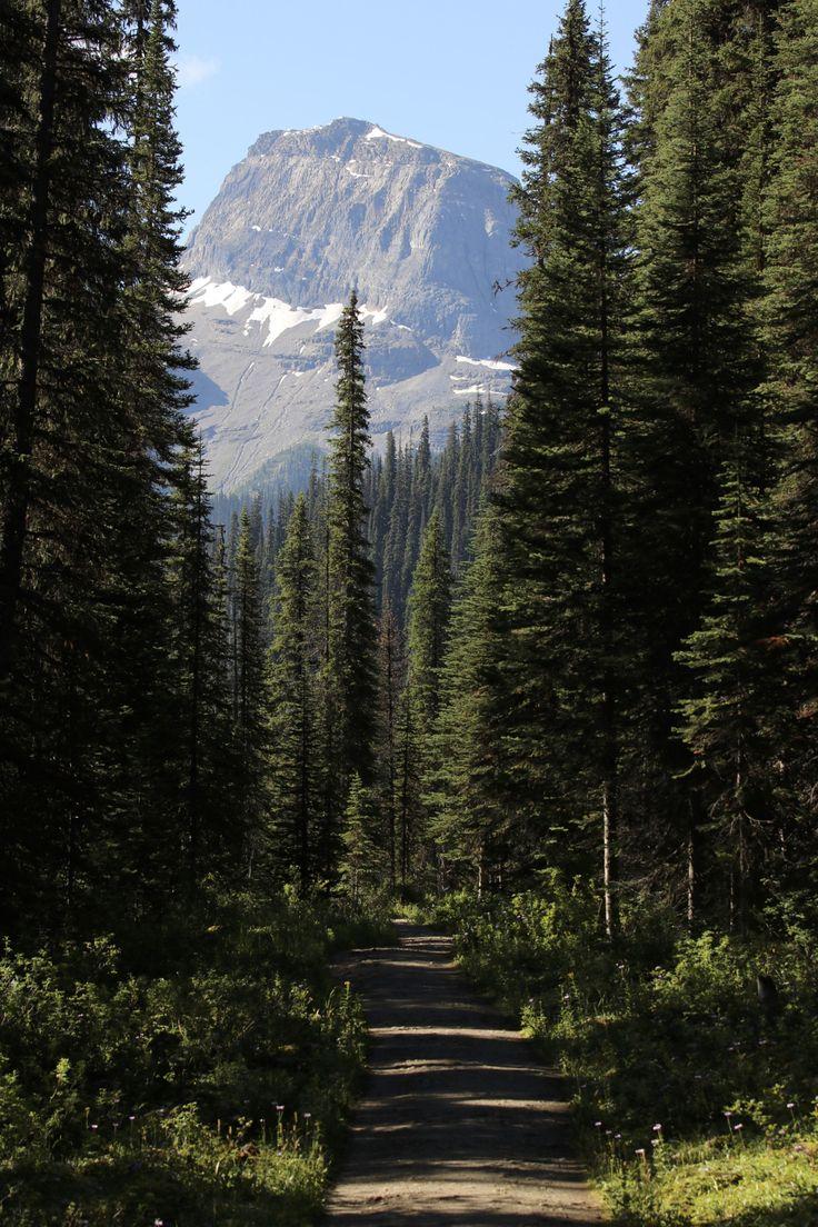 "theencompassingworld:  "" Yoho Glacier Trail, British Columbia, Canada  More of our amazing world  """