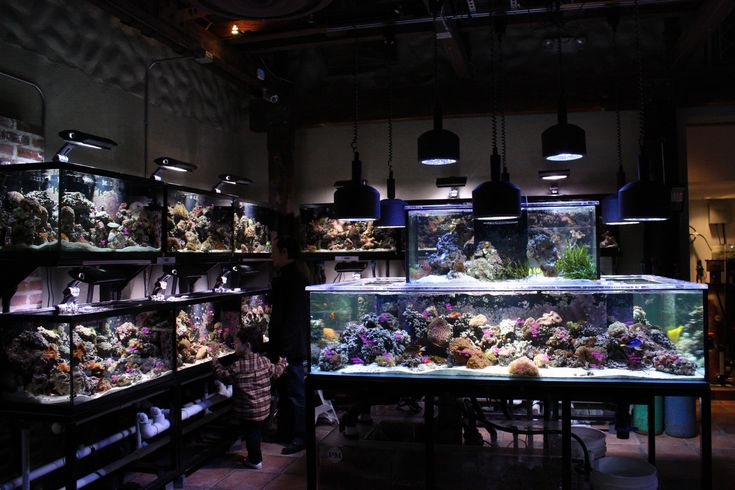 the different things to consider in making a terrarium The next thing you need to consider is size most terrariums are ideas for terrarium containers many different ways of making plastic now that it.
