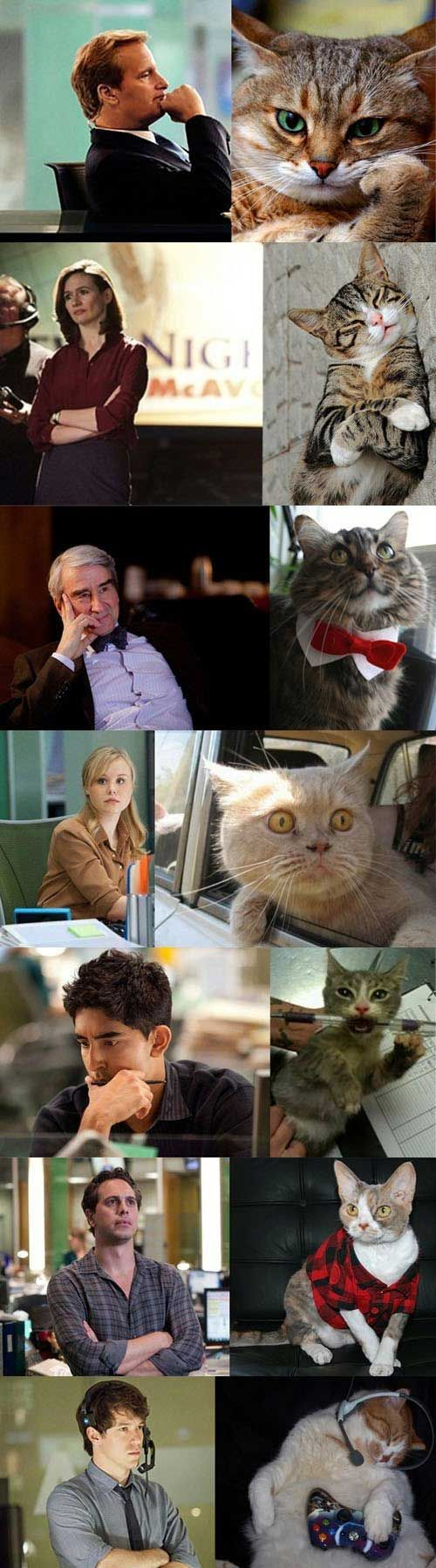 The Newsroom Cast Vs Cat