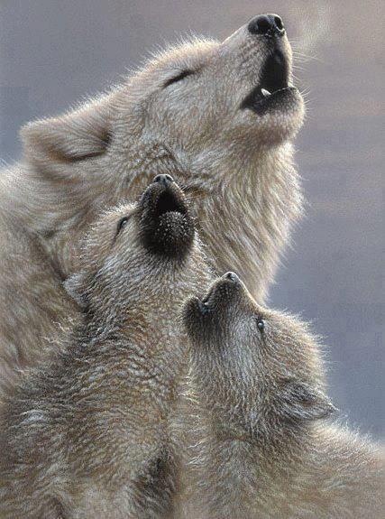 how to make a dog howl like a wolf