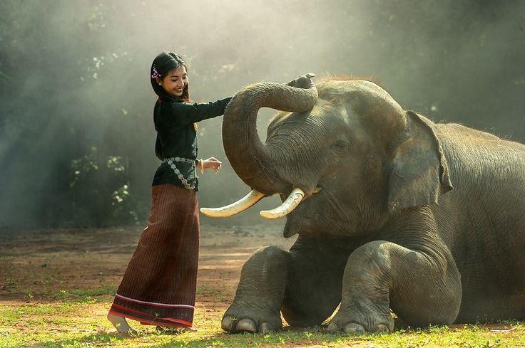 Az elefánt, mint erőállat