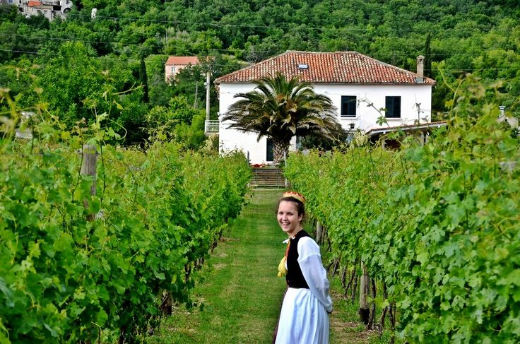 Exploring Croatia's Wine Regions