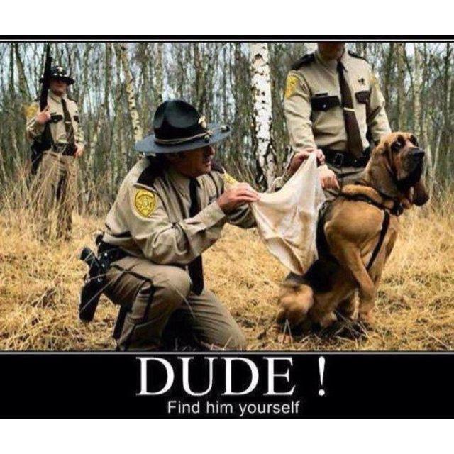 Bloodhound humor