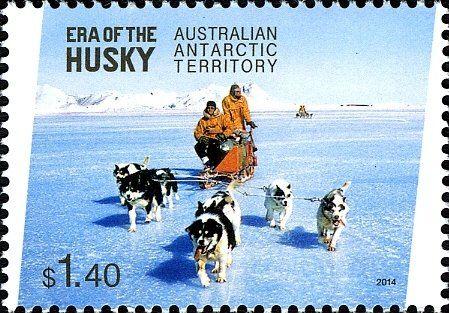 Stamp: Husky (Canis lupus familiaris) Team (Australian Antarctic Territory (AAT)) (Era of the husky) Mi:AQ 224,Yt:AQ 221