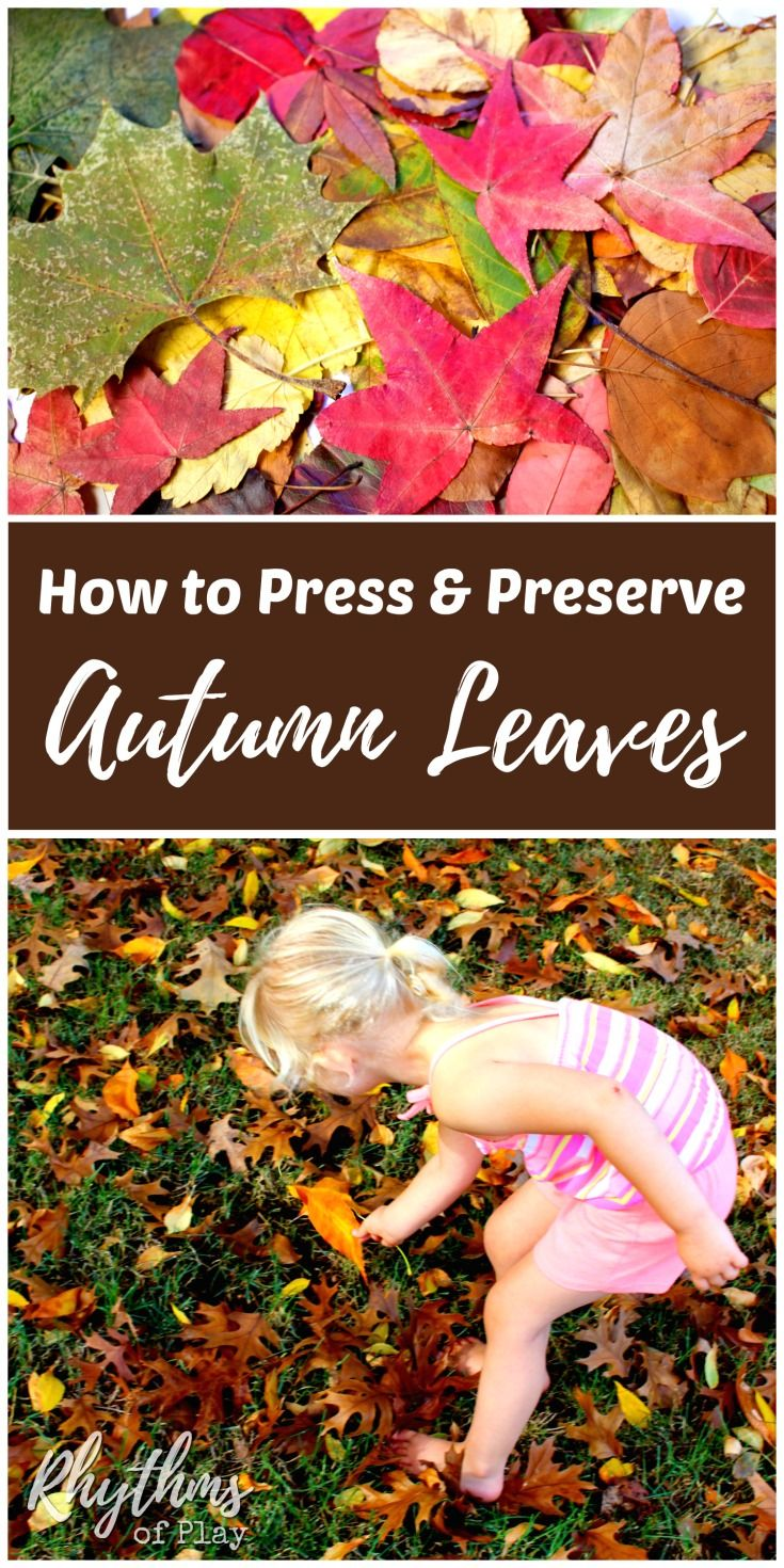 Leaves on pinterest autumn leaves fall leaves crafts and fall - How To Press And Preserve Fall Leaves Autumn Activitiesactivities