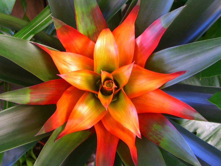 http://nottootall.hubpages.com/hub/Indoor-Plants-For-The-Holidays-Bromeliads-And-Tillandsias