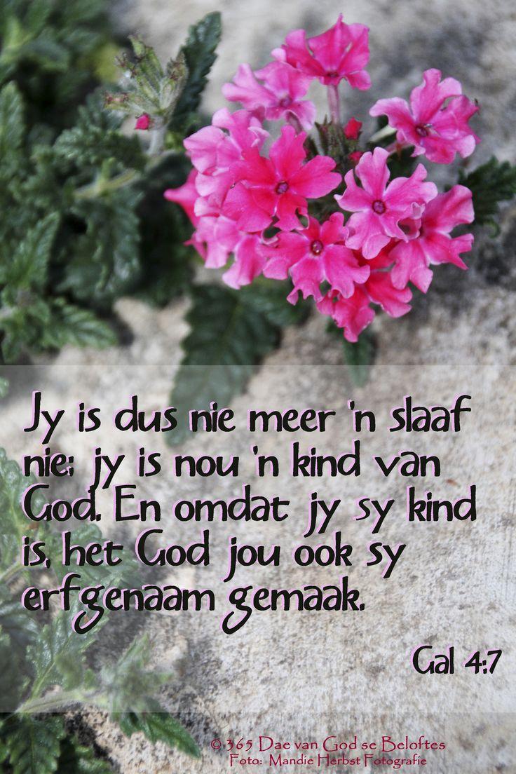 Dag 111 Bybelverse Gal 4:7 Jy is dus nie meer 'n slaaf nie; jy is nou 'n kind van God. En omdat jy sy kind is, het God jou ook sy erfgenaam gemaak