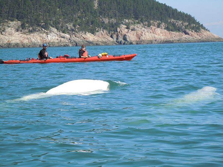 Activités au Camping Falaise-sur-Mer à Charlevoix : observation des baleines, piscine chauffée, terrain de jeux, sports et bien plus!