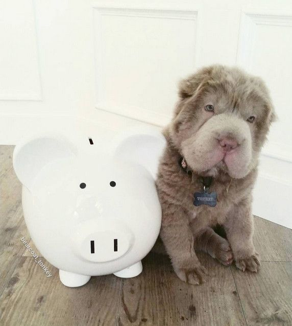 Even adorable puppies need to think of their financial future.