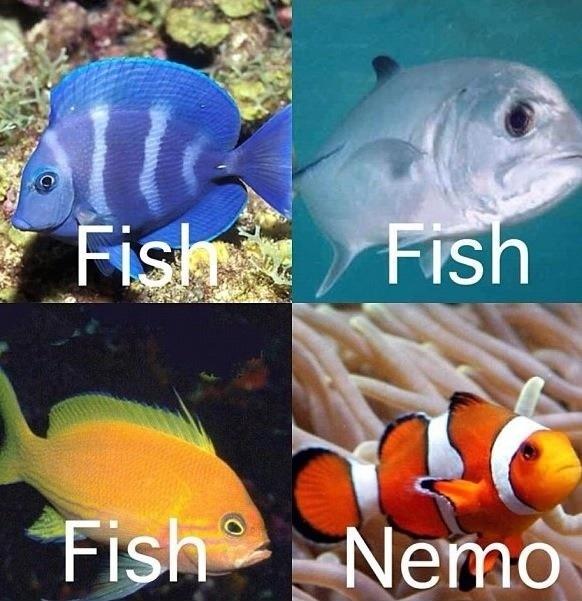Fish fishNemo..!