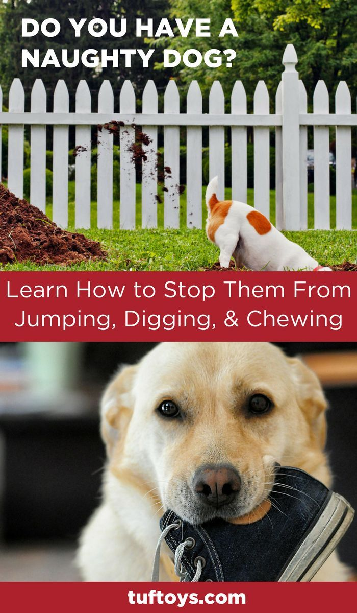 Naughty Dogs Stop Jumping Stop Chewing Stop Digging Dog