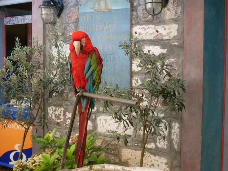 ofcourse there is a parrot at the pirate bar