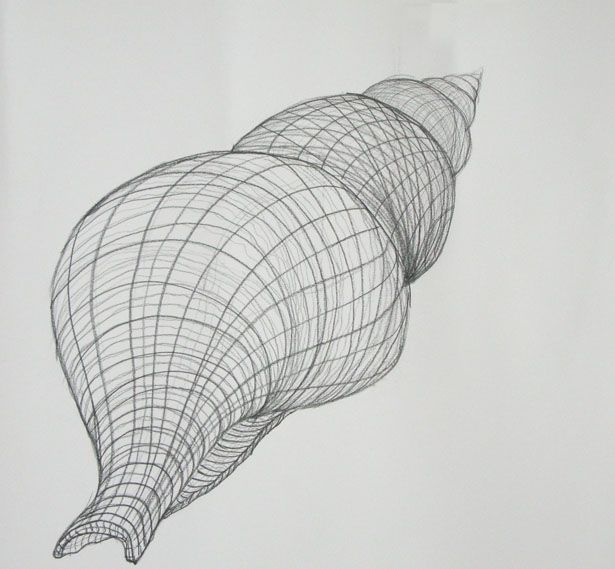 Weighted Contour Line Drawing : Best ideas about contour line drawing on pinterest