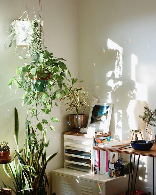 12815 besten urban jungle bloggers bilder auf pinterest for Glasvase bepflanzen