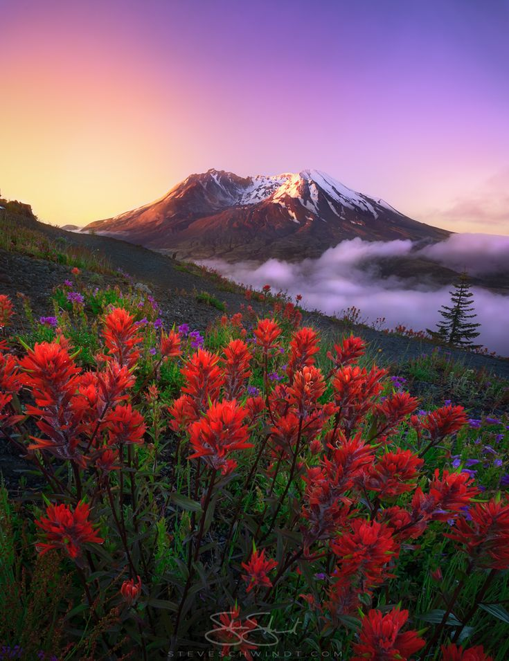 "My last photo was very well-received so here's the follow-up and main reason why I went out there (and yes, slept in my car): indian paintbrush flowers! ""Indian Sunrise"" - Mount St. Helens in Washington State"