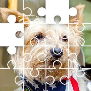 Dog Star Scarf Jigsaw Puzzle, 51 Piece Crazy. Small dog with an American flag neck