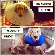 This was how my dog felt when he had to wear a cone