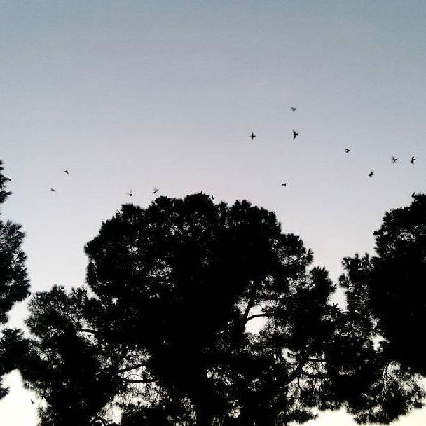 #storm #birds #bird #trees #tree #photography #canon #nikon