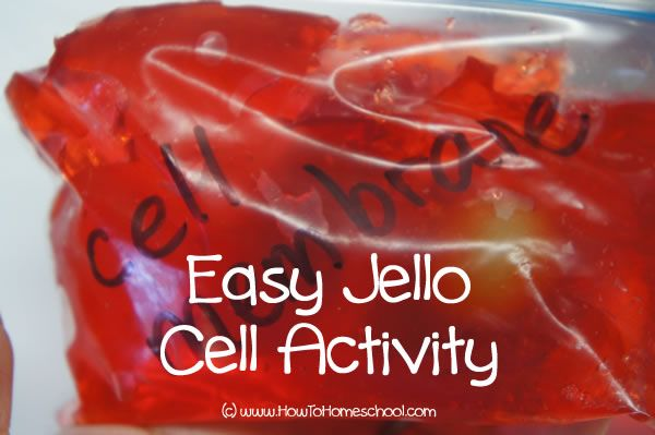 Cell Activity Guide &  How to Make a 3D Cell Model with Jello | from HowToHomeschoolMyChild.com