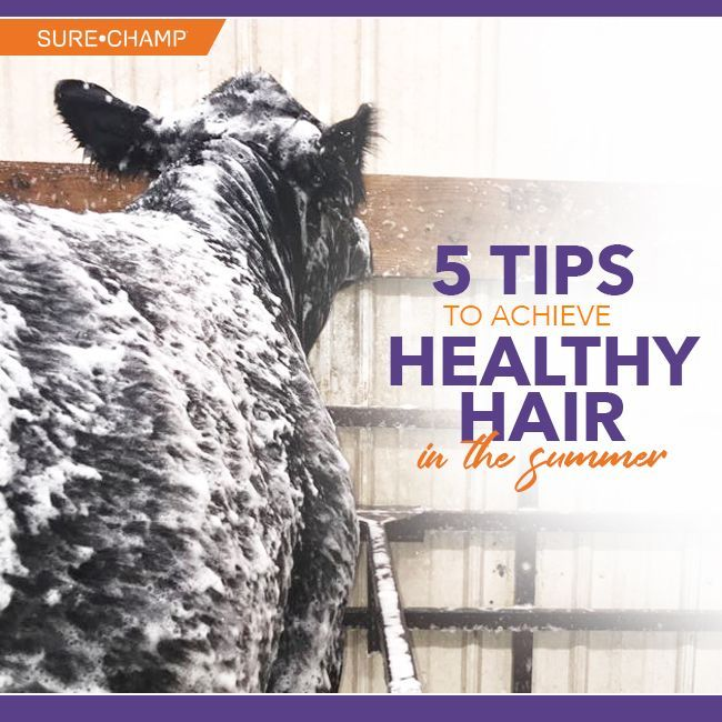 5 Tips to Achieve Healthy Hair in the Summer