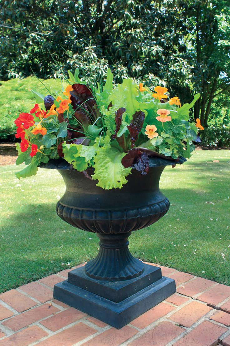 23 best container gardening images on pinterest fall planters floral arrangements and garden. Black Bedroom Furniture Sets. Home Design Ideas