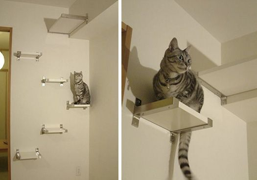IKEA Cat Shelf Hack  If you don't have any cats, this will be perfect for a simple, cute yet clean bookshelves!