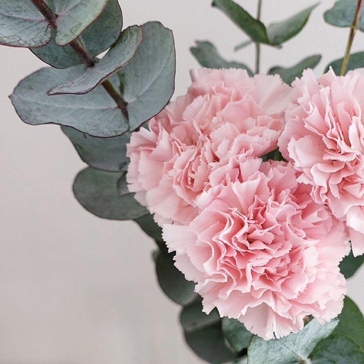 Valentine's day | Flowers
