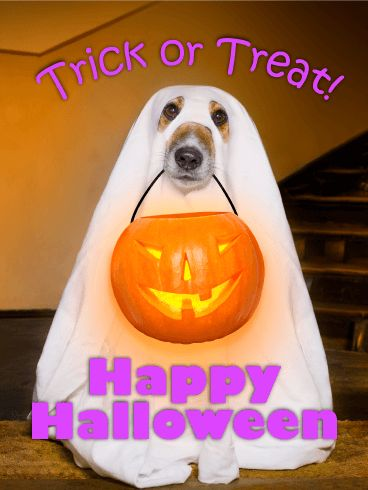 ghost dog happy halloween card a cute pup in a ghost costume has come to the door with his jack o lantern pail to say trick or treat - What To Say In A Halloween Card