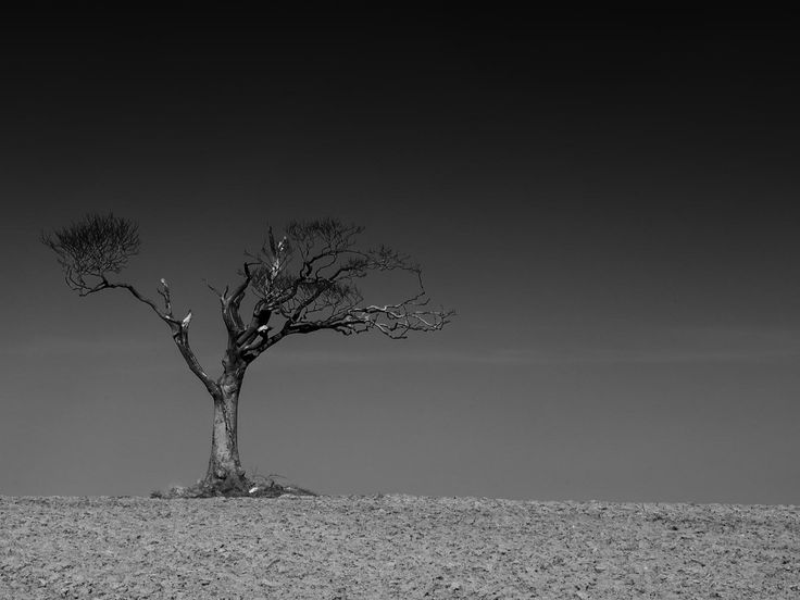 """Rhianna's Tree - """"Gold"""" award August 2013, Pictorial Fine Art section SWPP Monthly Competitions."""