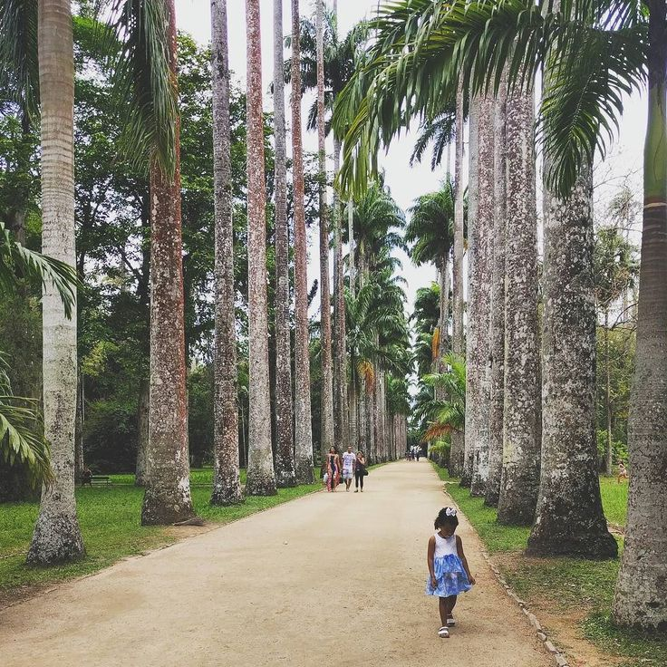 Passeggiare al Giardino Botanico di Rio #jardimbotanico #riodejaneiro #beleza