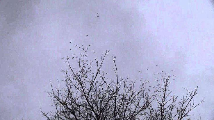 Crazy Pattern of circling birds